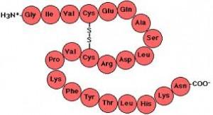 peptide chain